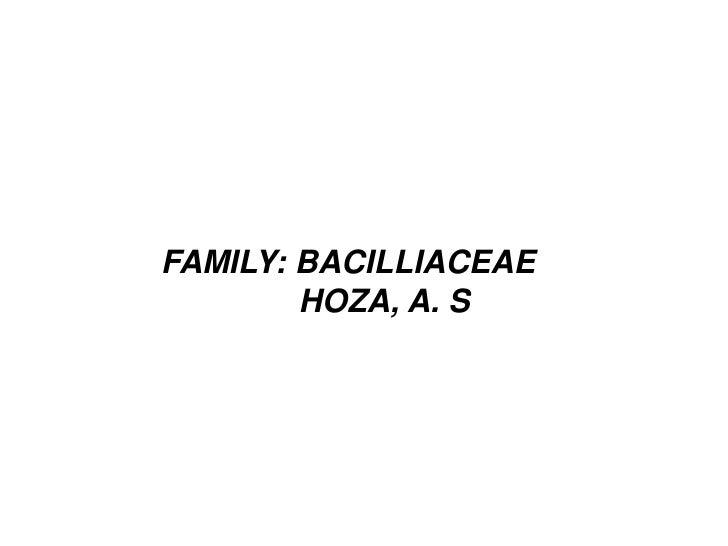 FAMILY: BACILLIACEAE        HOZA, A. S
