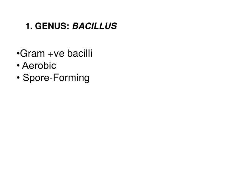 1. GENUS: BACILLUS•Gram +ve bacilli• Aerobic• Spore-Forming