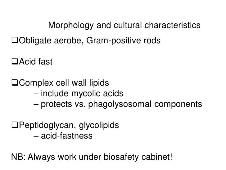 Morphology and cultural characteristicsObligate aerobe, Gram-positive rodsAcid fastComplex cell wall lipids   – include...
