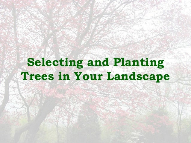 Selecting and PlantingTrees in Your Landscape