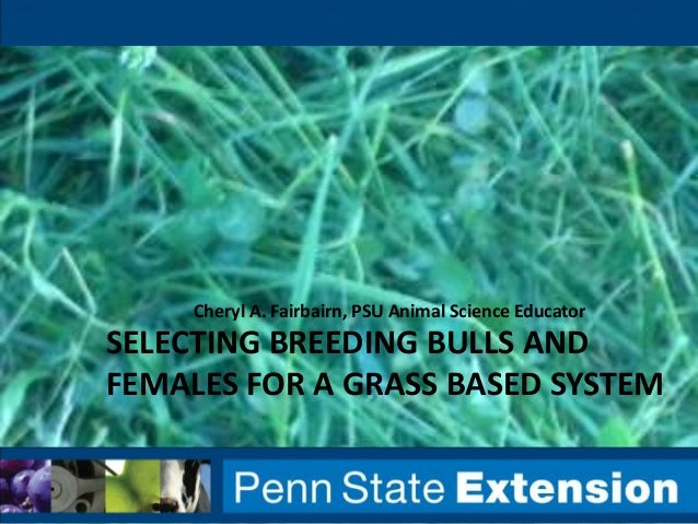 Cheryl A. Fairbairn, PSU Animal Science Educator  SELECTING BREEDING BULLS AND FEMALES FOR A GRASS BASED SYSTEM