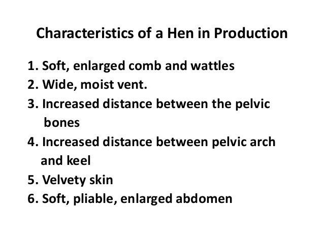 Characteristics of a Hen in Production 1. Soft, enlarged comb and wattles 2. Wide, moist vent. 3. Increased distance betwe...