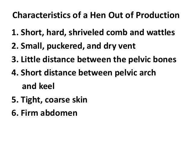 Characteristics of a Hen Out of Production 1. Short, hard, shriveled comb and wattles 2. Small, puckered, and dry vent 3. ...
