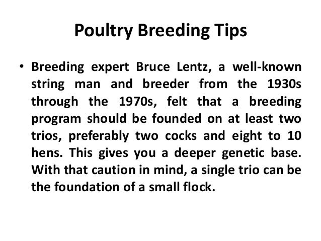 Breeding Out-and-Out • In its most extreme form, new males are bought into the flock each year. • Even when new males are ...