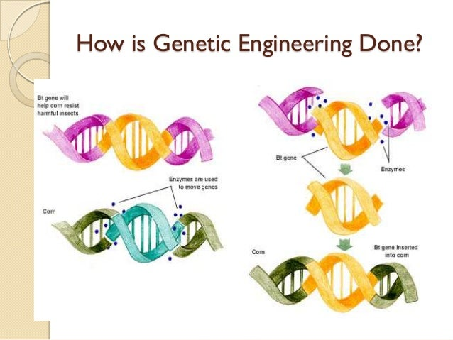 genetic engineering will eventually prove to Benefits of human genetic engineering or even performing genetic surgery eventually the hope is to completely eliminate certain genetic diseases as well as.