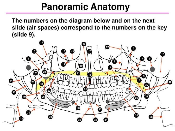 Self study-pan-anatomy