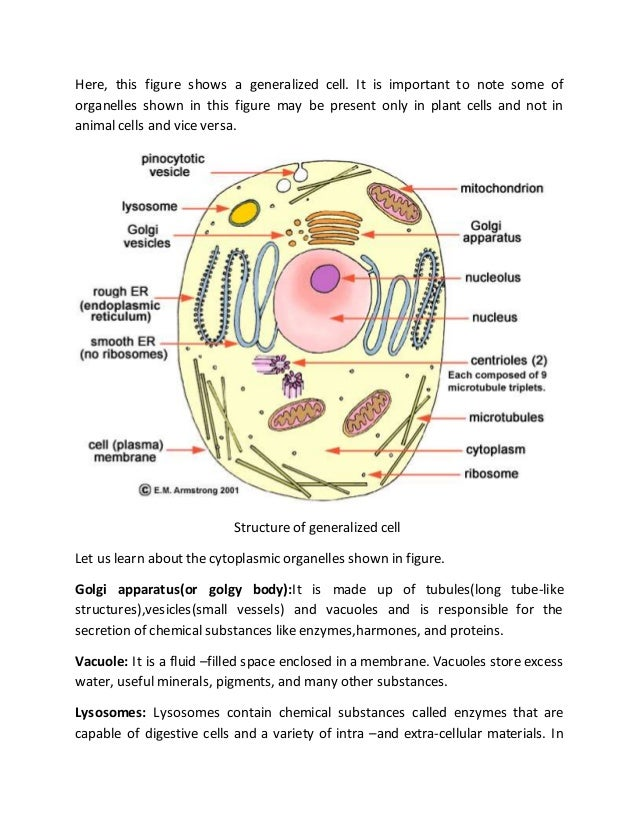 animal cell parts and functions chart pdf