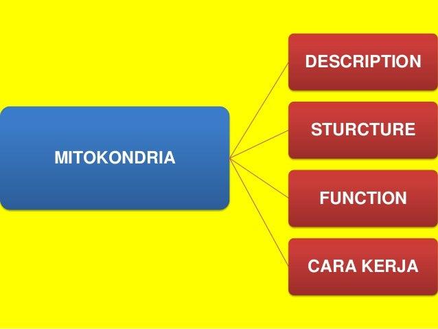 Sel Hewan Dan Tumbuhan Dan Mitokandria