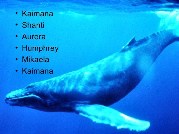 <ul><li>Kaimana </li></ul><ul><li>Shanti </li></ul><ul><li>Aurora </li></ul><ul><li>Humphrey  </li></ul><ul><li>Mikaela  <...