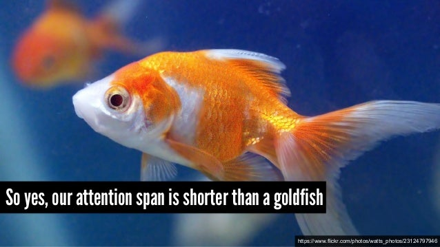 So yes, our attention span is shorter than a goldfish https://www.flickr.com/photos/watts_photos/23124797946