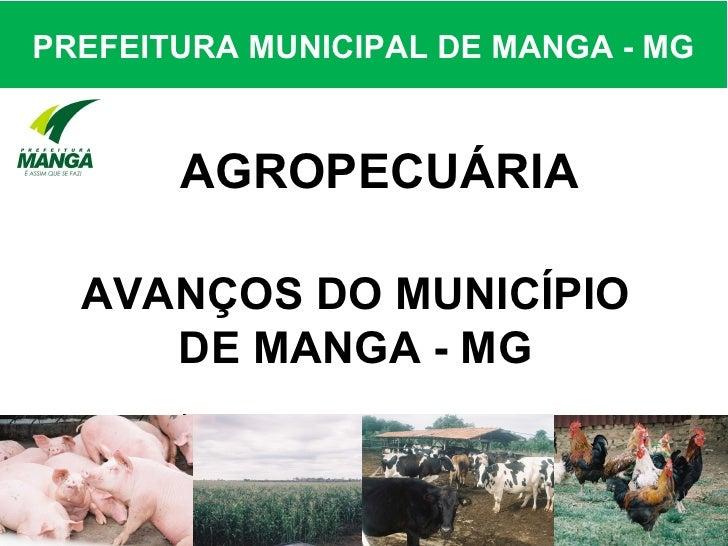 PREFEITURA MUNICIPAL DE MANGA - MG       AGROPECUÁRIA  AVANÇOS DO MUNICÍPIO     DE MANGA - MG