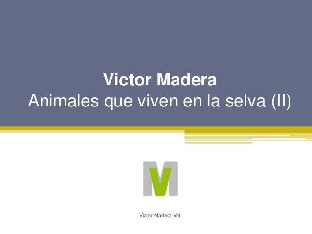Victor Madera Animales que viven en la selva (II) Victor Madera Vet