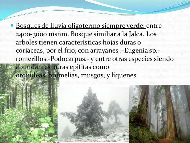 Plantas De Selva Alta: Selva Alta Andres