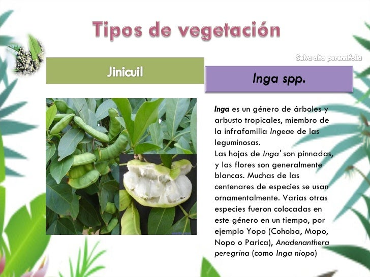 Plantas De Selva Alta: Selva Alta Perennifolia