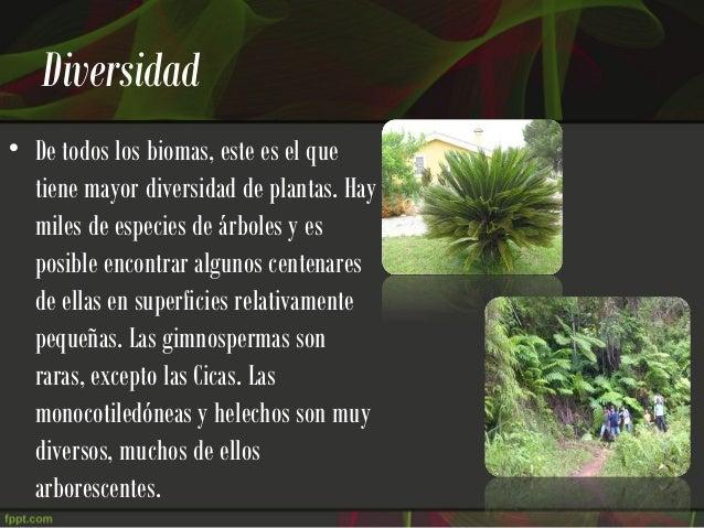 Selva humeda for Cuales son los tipos de arboles
