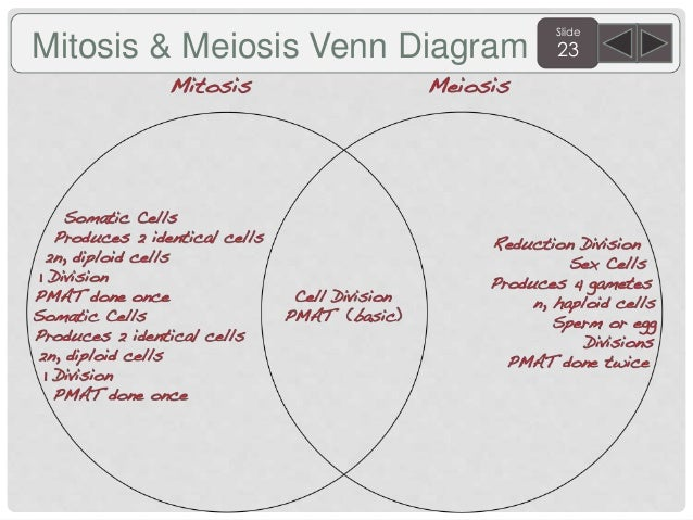 Venn diagram mitosis meiosis 1 and meiosis 2 diy wiring diagrams sem 2 biology agenda and targets 2015 rh slideshare net illustration of the process of meiosis dlagram ii of meiosis ccuart Image collections