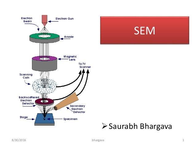 Scanning electron microscopy sem lecture 8302016 bhargava 1 sem saurabh bhargava ccuart Images