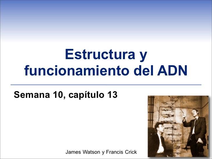 Estructura y  funcionamiento del ADNSemana 10, capítulo 13          James Watson y Francis Crick