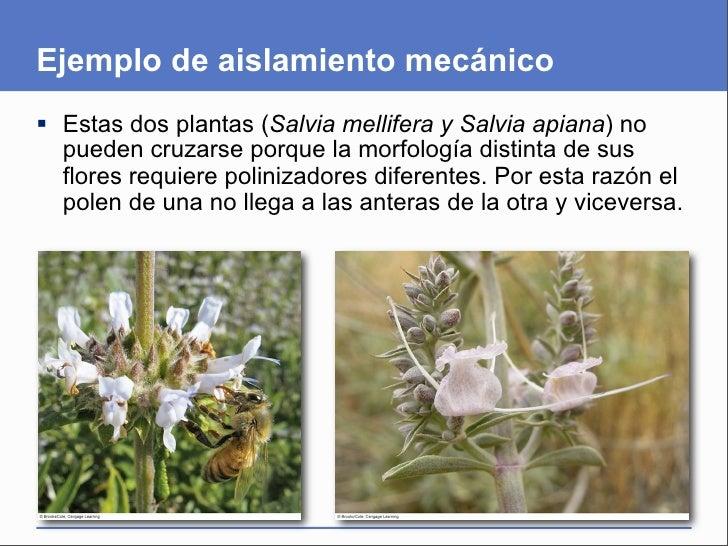 Presentaci n del cap tulo 18 for Incompatibilidad en plantas