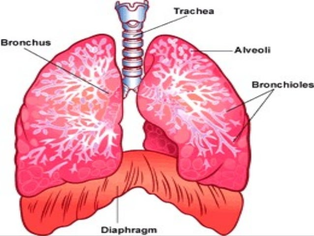 Upper Respiratory Tract Infection