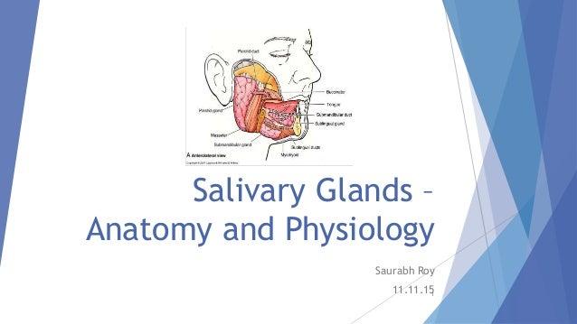 Pdf salivary gland