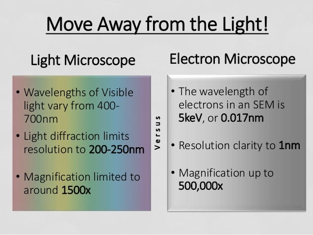 light microscope and electron microscopes essay Home comparison between light and electron microscope comparison between light and electron microscope light microscopes are still.