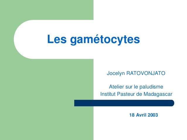 Les gamétocytes          Jocelyn RATOVONJATO            Atelier sur le paludisme        Institut Pasteur de Madagascar    ...