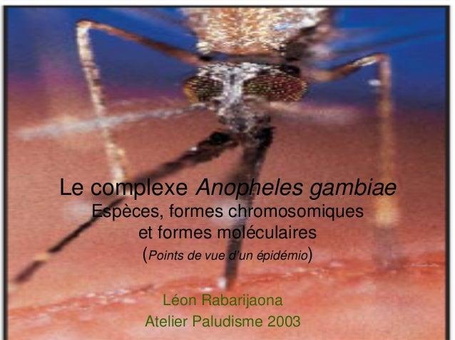 Le complexe Anopheles gambiae  Espèces, formes chromosomiques       et formes moléculaires       (Points de vue d'un épidé...