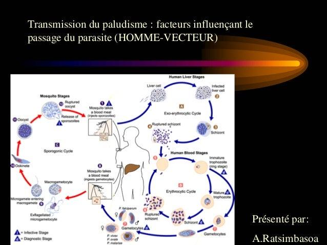 Transmission du paludisme : facteurs influençant lepassage du parasite (HOMME-VECTEUR)                                    ...