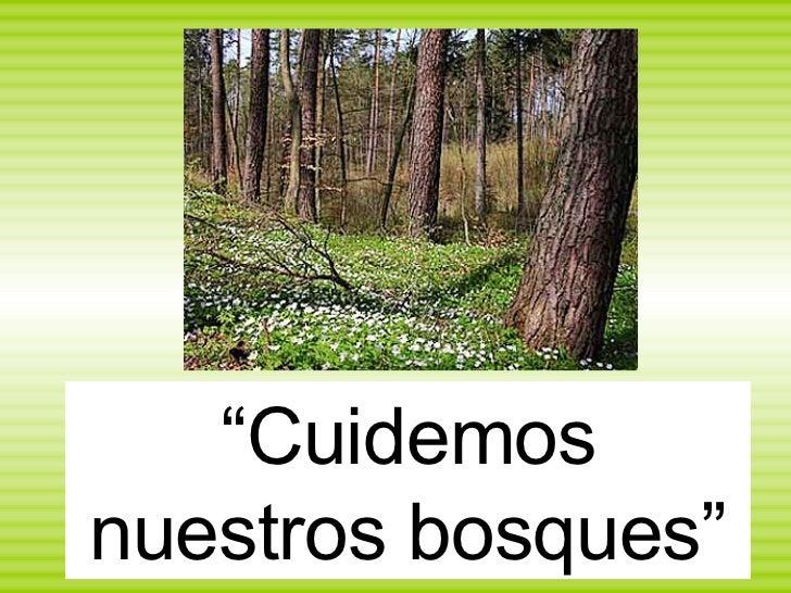 """"""" Cuidemos nuestros bosques"""""""