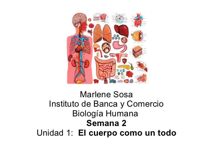 Marlene Sosa   Instituto de Banca y Comercio          Biología Humana              Semana 2Unidad 1: El cuerpo como un todo