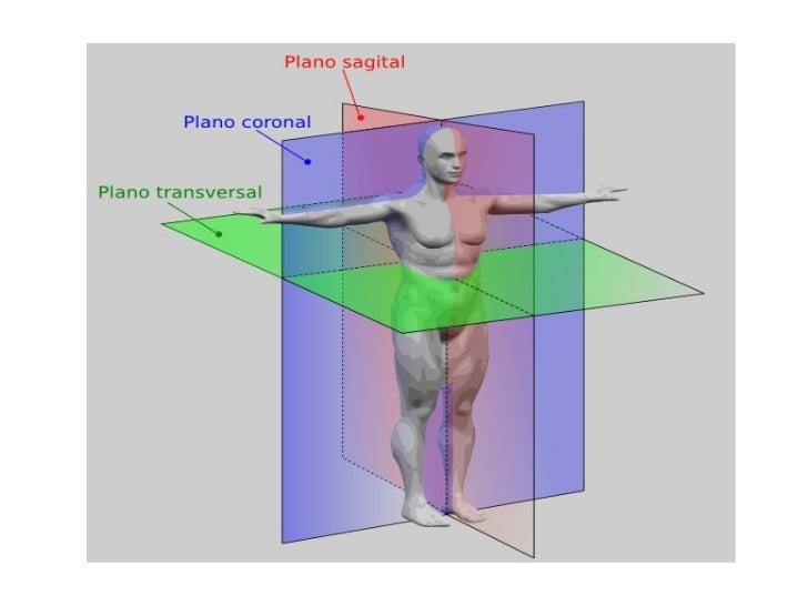 Semana 2. intro al estudio del cuerpo humano. ibc biol humana