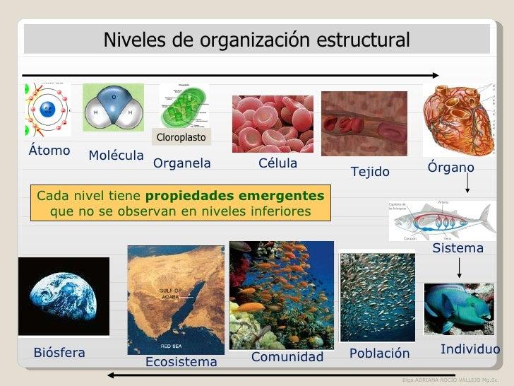 The best: peroxisomas funcion y estructura yahoo dating