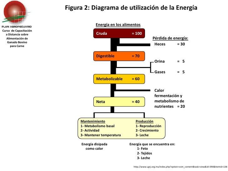 Figura 2: Diagrama de utilización de la Energía <br />Energía en los alimentos<br />Curso  de Capacitación a Distancia sob...