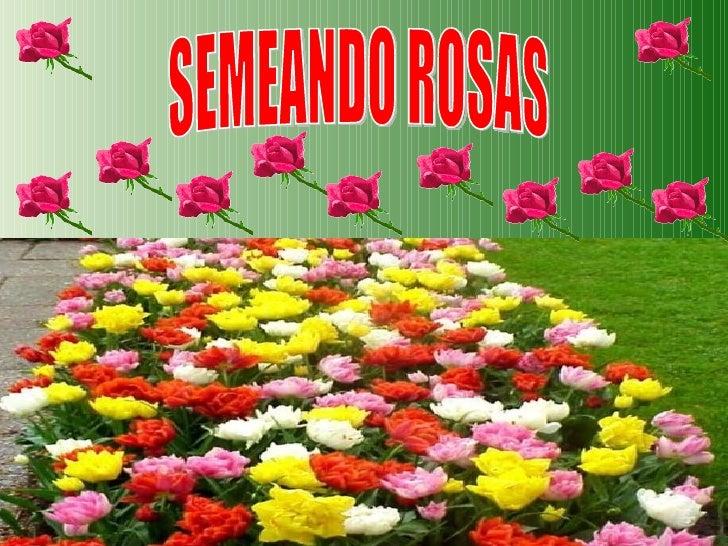 SEMEANDO ROSAS