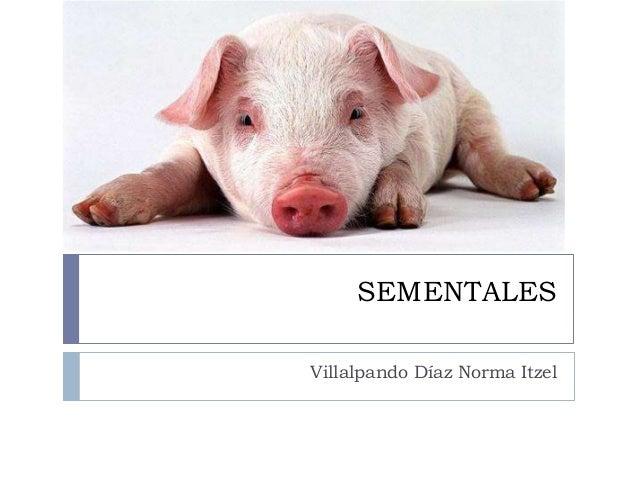 SEMENTALES Villalpando Díaz Norma Itzel
