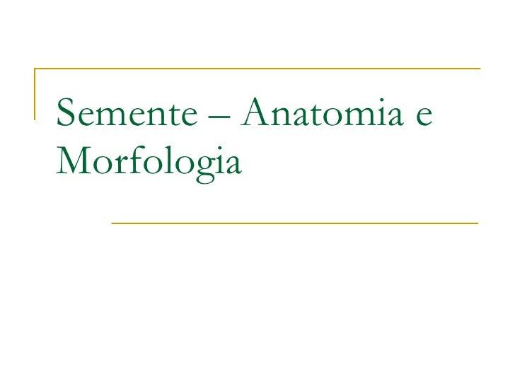 Semente – Anatomia e Morfologia