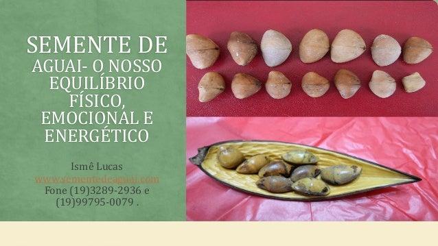 SEMENTE DE AGUAI- O NOSSO EQUILÍBRIO FÍSICO, EMOCIONAL E ENERGÉTICO Ismê Lucas www.sementedeaguai.com Fone (19)3289-2936 e...