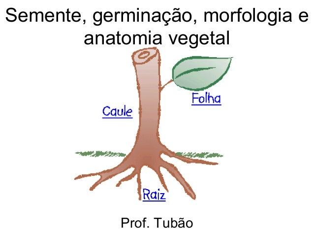 Semente, germinação, morfologia e       anatomia vegetal            Prof. Tubão