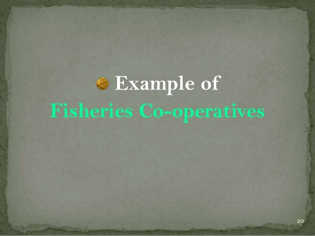 Example of Fisheries Co-operatives  20
