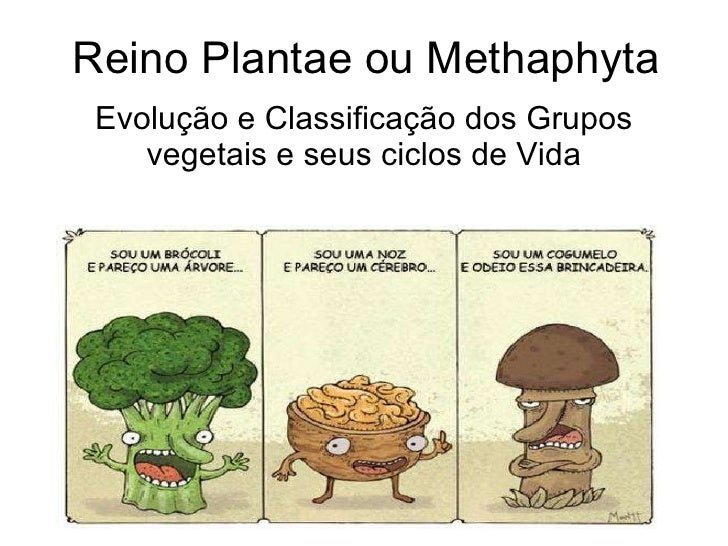 Reino Plantae ou Methaphyta Evolução e Classificação dos Grupos vegetais e seus ciclos de Vida