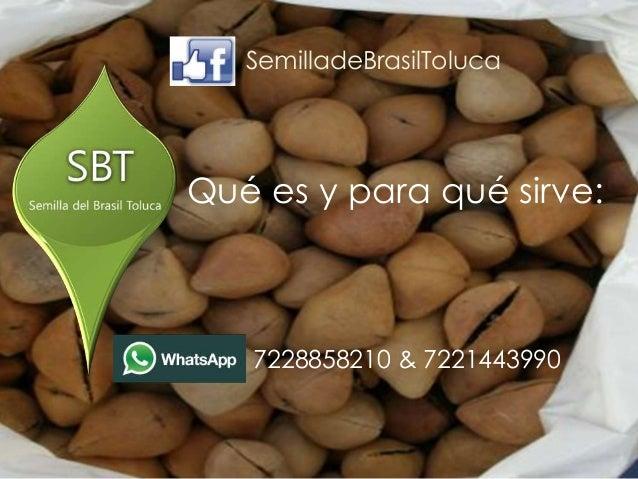 que es la semilla de brasil