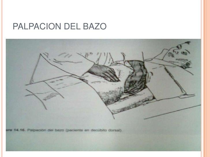 PALPACION DEL BAZO