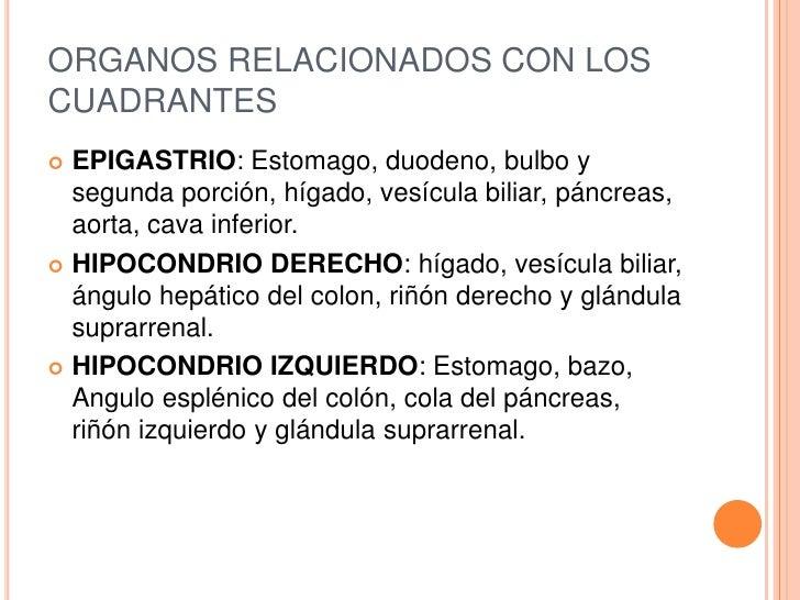 ORGANOS RELACIONADOS CON LOSCUADRANTES EPIGASTRIO: Estomago, duodeno, bulbo y  segunda porción, hígado, vesícula biliar, ...