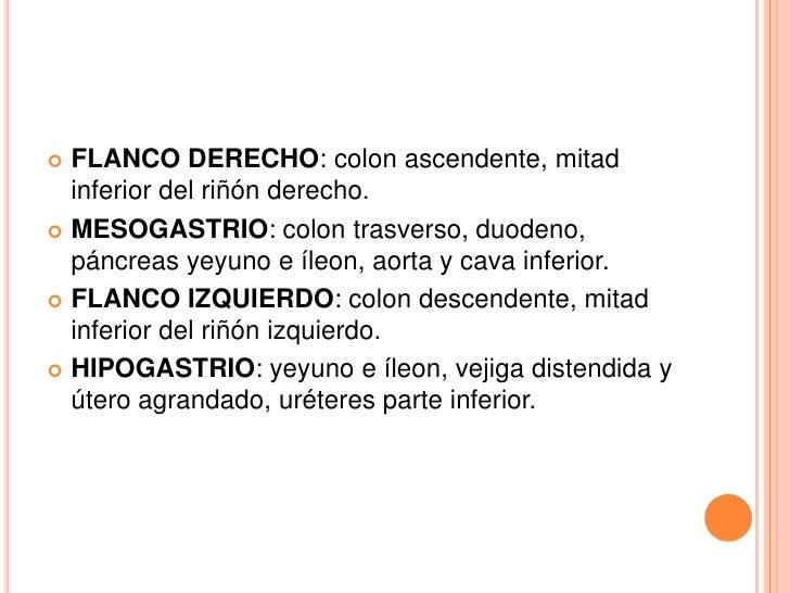  FLANCO DERECHO: colon ascendente, mitad  inferior del riñón derecho. MESOGASTRIO: colon trasverso, duodeno,  páncreas y...
