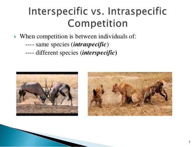 interspecific relationship definition webster