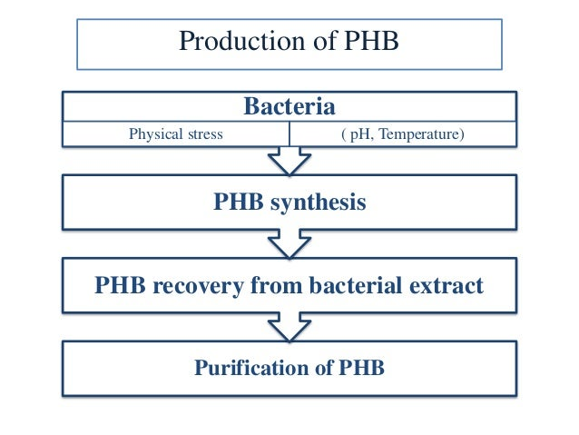 organism used to synthesise phb Variants of this bacterium (e coli k12), which lack certain characteristics of the wild-type bacterium that are vital to survival in the field, are often used in molecular genetics as the host organism for the cloning of recombinant dna fragments.