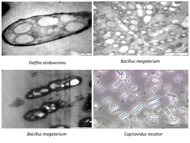 application of bacteria On the surface of gram-negative bacteria has stimulated considerable interest in  practical applications areas in which surface expression is particularly.