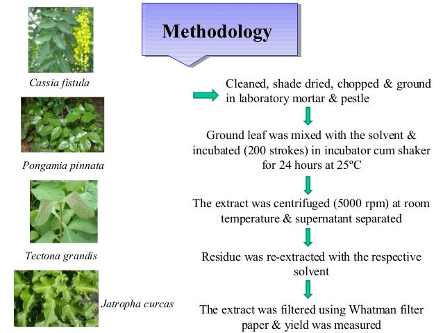 Phytochemical screening and extraction essay