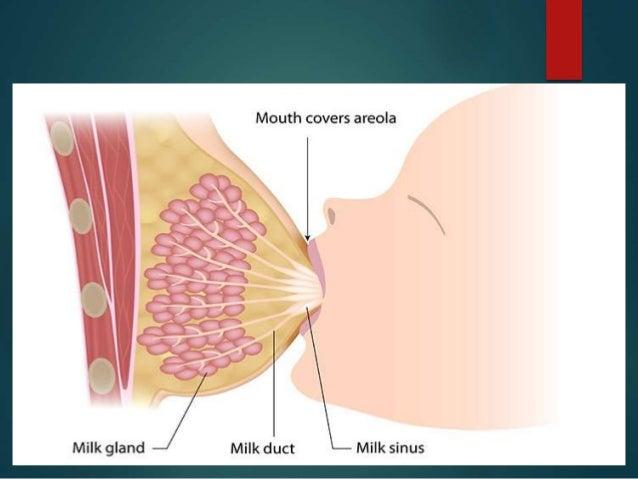 thoracic cavity relationship, Human Body